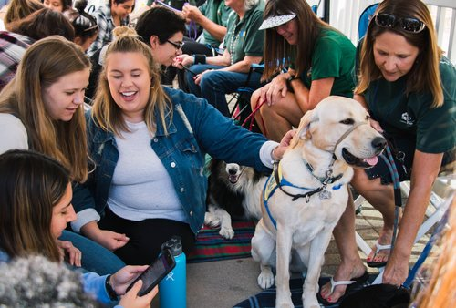 Students with a therapy dog