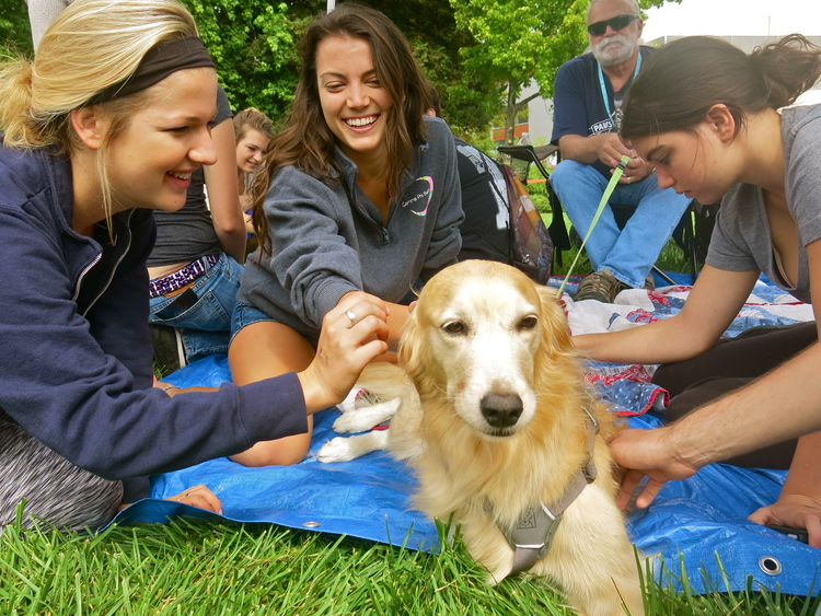 Students playing with dogs